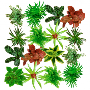 pack-plantes