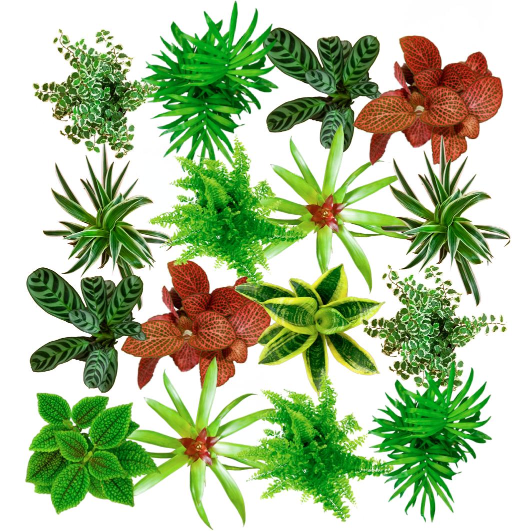 Phytoth rapie st phan rami acupuncteurst phan rami for Mur vegetal fausse plante
